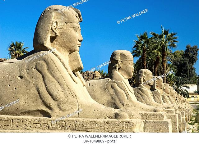 Row of sphinxes in front of the temple site of Karnak in Luxor, Egypt, Africa