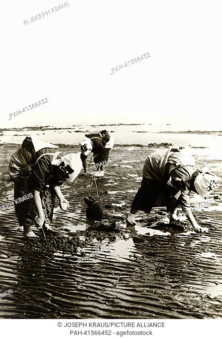Women collecting mussels on the beach during falling tide. Pictured in the early 1920th. - /Japan