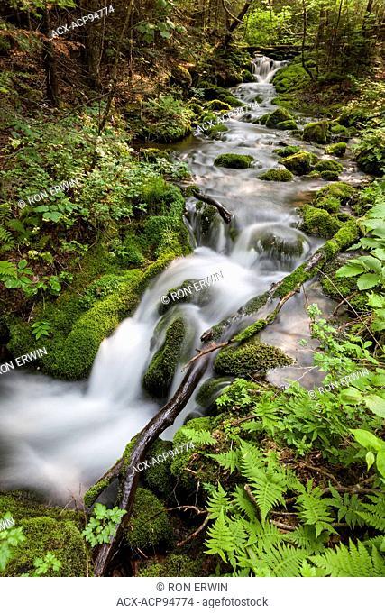 Mamozekel Brook in Mount Carleton Provincial Park, New Brunswick, Canada