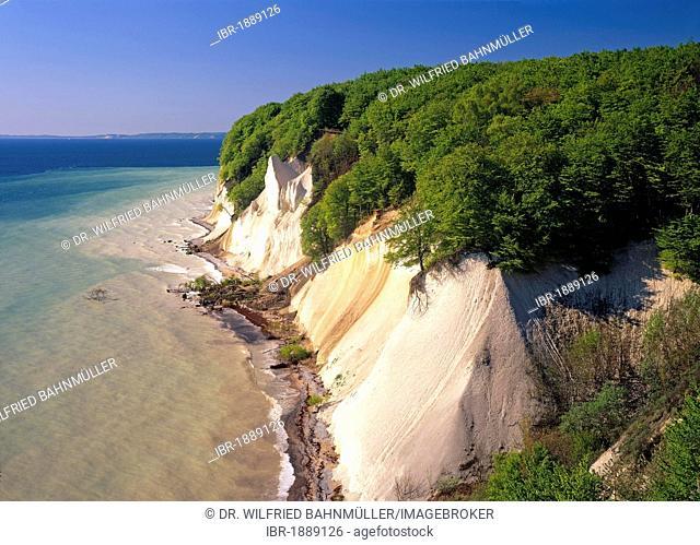 Chalk cliffs on the coast, Jasmund National Park, Ruegen, Mecklenburg-Western Pomerania, Germany, Europe