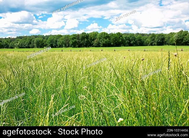 Green pastures of horse farms. Countryside spring landscape