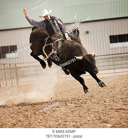 USA, Utah, Highland, Bull rider during rodeo
