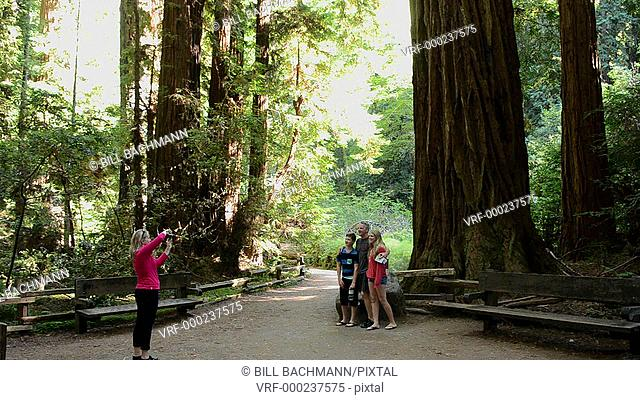 Muir Woods California CA above San Francisco wonderful giant Redwoods and tourists in woods