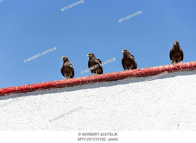 Four eagles sitting on top of wall