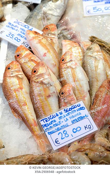 Rock Fish for Sale on Market Stall, Bologna; Italy
