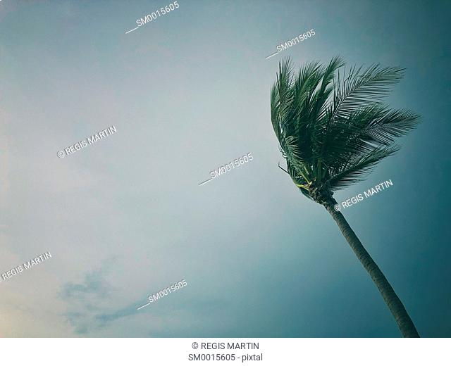 Top of a palm tree in the wind