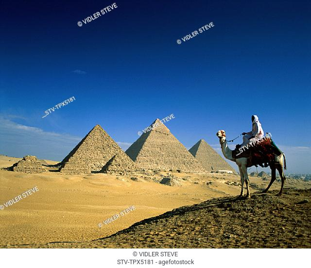 Camel, Egypt, Africa, Giza, Holiday, Landmark, Man, Pyramids, Tourism, Travel, Vacation