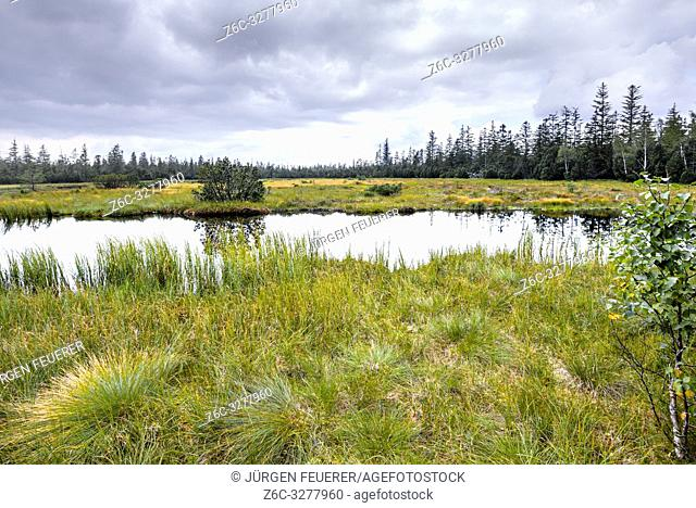bog lake Hohlohsee at Kaltenbronn, Central/North Black Forest Nature Park, Germany, community of Gernsbach, plateau between the valleys of Murg and Enz