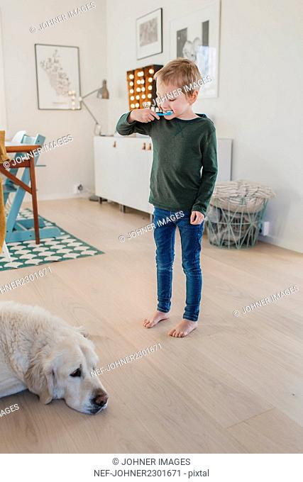 Boy brushing teeth and looking at dog in living room