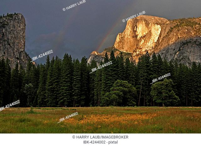 Flower meadow in Yosemite Valley, Half Dome behind illuminated by setting sun, stormy mood, evening light, Yosemite National Park, USA