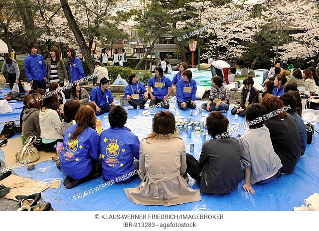 Group of students celebrating the Cherry Blossom Festival by playing party games under a blossoming cherry tree in Maruyama Park, Kyoto, Japan, Asia