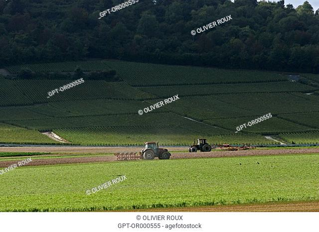 PLOWING OF FARM LANDS AT THE EDGE OF THE VINEYARDS OF THE COTE DES BLANCS, MARNE 51