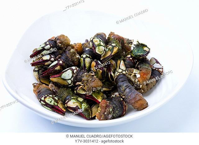 "Goose barnacles (Pollicipes pollicipes), known as ""Percebes"" in Spain and Portugal, where they are consumed as a expensive delicacy"