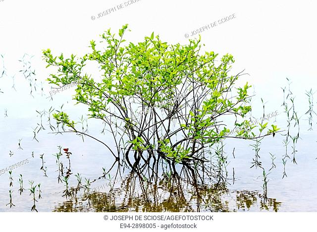 A small shrub partially submerged by lake water with branches and leaves reflecting in the water