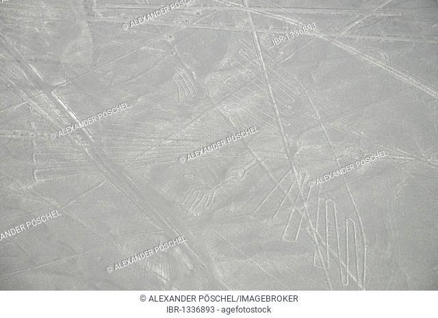 Hummingbird, 96m, Nazca Lines, geoglyphs in the desert, Nazca, Peru, South America, Latin America