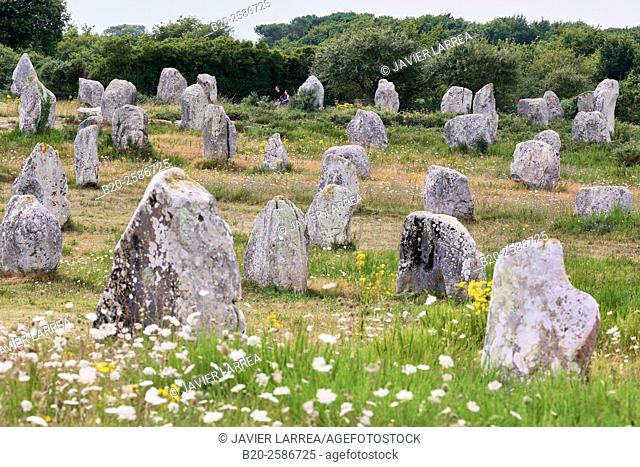 Megalithic alignments of standing stones of Kermario and Menec, Carnac, Morbihan, Brittany, Bretagne, France