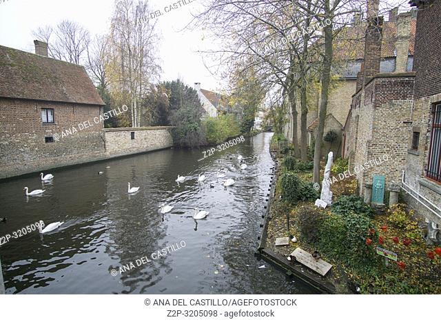 BRUGES BELGIUM ON NOVEMBER 25, 2018: The love pond, Fairy tale landscape with swans resting - Bruges cityscape panorama, old town facades