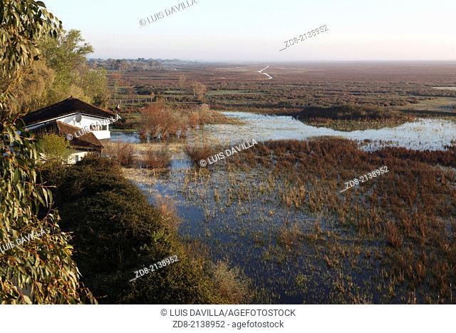 marismas in doñana national park.spain