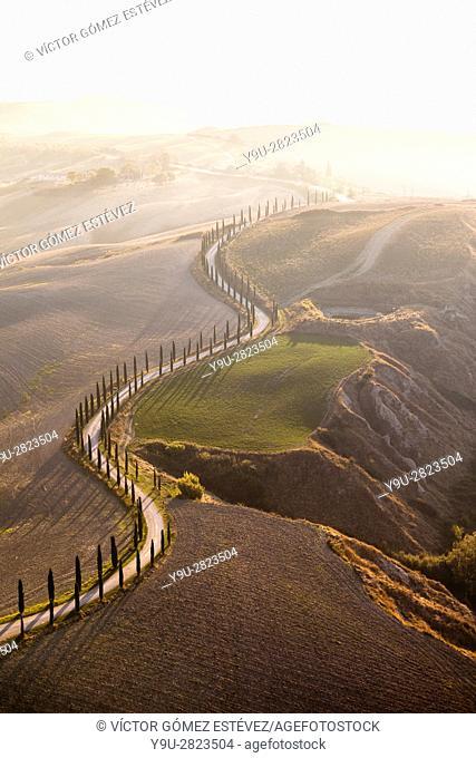 Tree-lined winding road. Tuscany, Italy