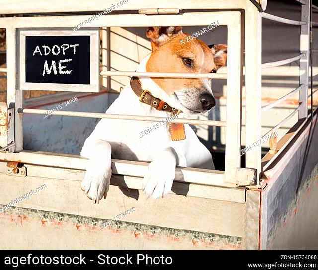 jack russell abandoned dog and left all alone in animal shelter or cage, begging to be adopted and come home to owners