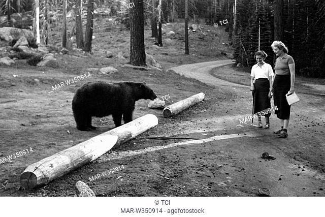 america, california, visitatrici del parco nazionale yosemite osservano un orso, 1930 1940