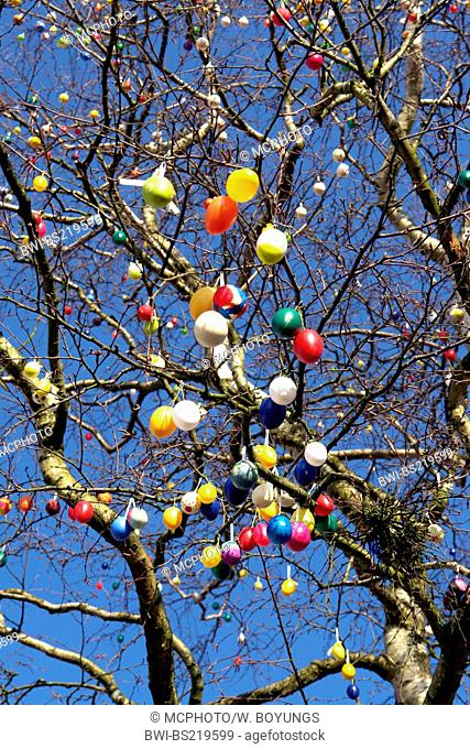 Tree with easter eggs, Germany, Lower Saxony