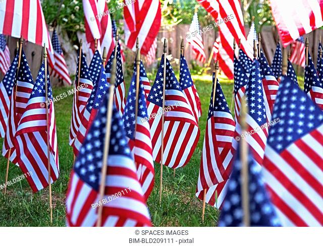 American flags planted in green lawn