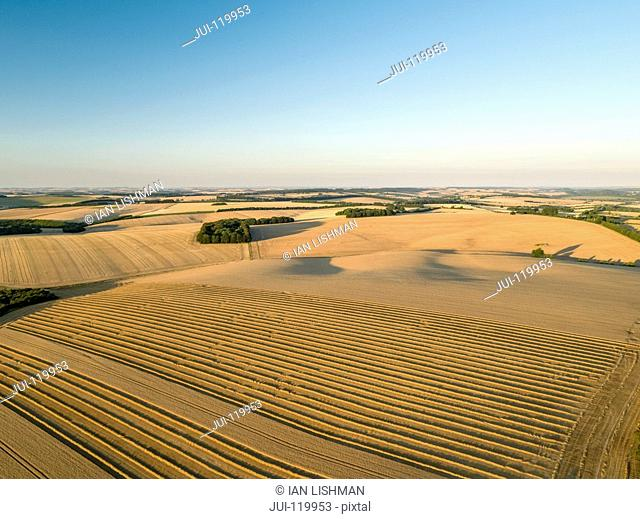 Harvest aerial landscape of summer wheat fields crops in sunset landscape light under blue sky on farm