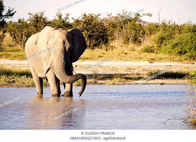 Botswana, North-west district, Chobe National Park, Savuti arid region, elephant at the point of water