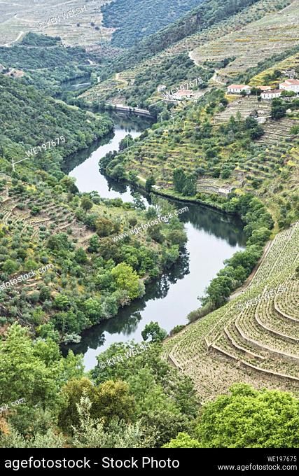 Portugal. Vineyards along the Tavora river, a tributary of the Douro river between Paso da Regua and Pinhao on the Viseu District or southern bank of the river
