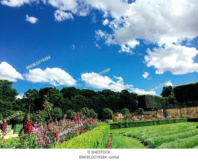 Manicured gardens under blue sky