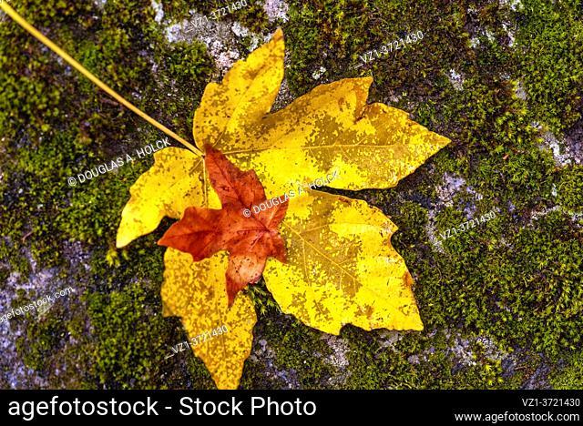 Leaf upon a Leaf Yosemite National Park CA USA World Location