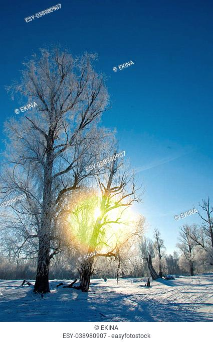 winter frost. winter-tide, winter-time. a deposit of small white ice crystals formed on the ground or other surfaces when the temperature falls below freezing