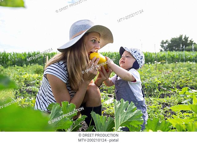 Baby boy feeding courgette to her mother in community garden, Bavaria, Germany