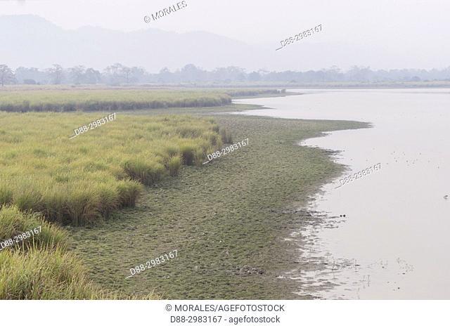 India, State of Assam, Kaziranga National Park, marshes