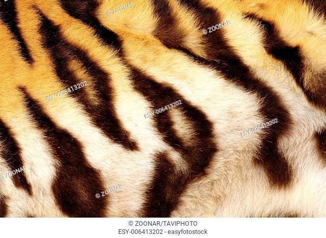 detail on tiger real black stripes