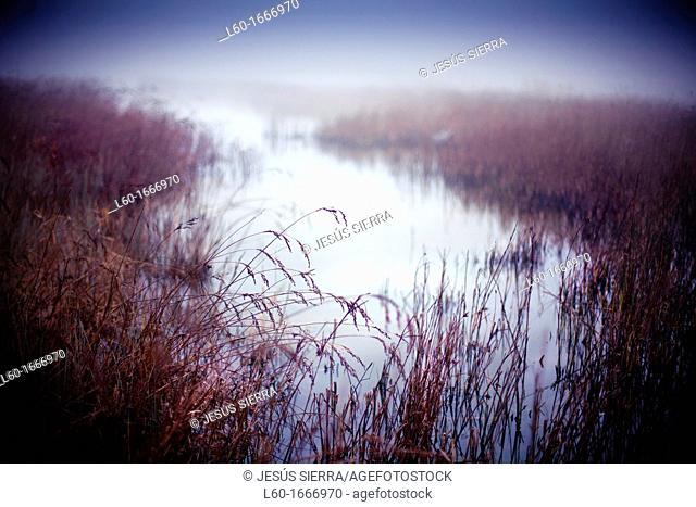 Fog in Doñana National Park, Guadalquivir river, Sanlucar de Barrameda, Cadiz province, Andalucia, Spain