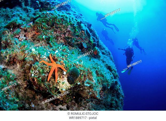 Scuba Diving, Men, Group, Red Sea Star, Reef