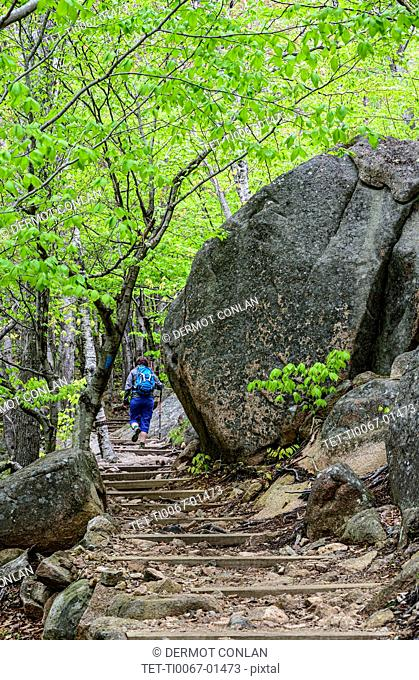 Woman hiking up steps in forest