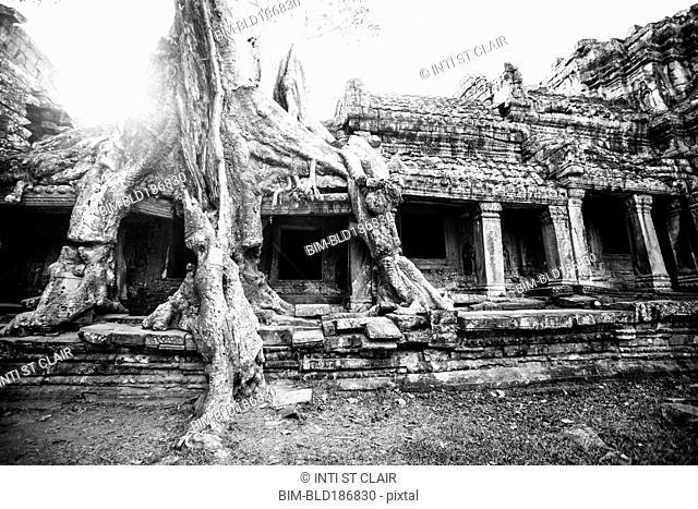 Tree growing on ruins at Angkor Wat, Siem Reap, Cambodia