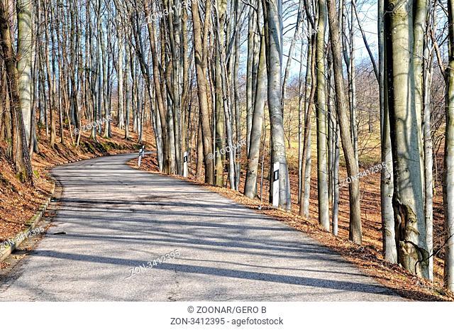 Straße durch den Wald, Road through the forest