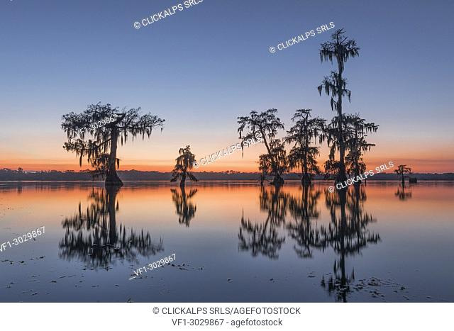 Lake Martin, Breaux Bridge, Atchafalaya Basin, Southern United States, USA; North America