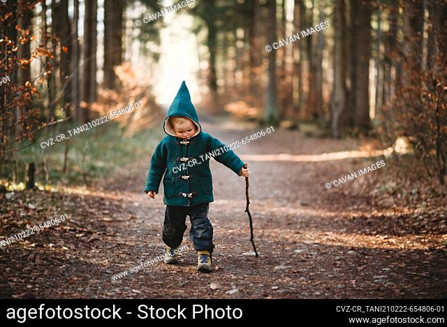 Young child walking with a stick in the forest on a sunny Fall day
