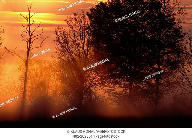 Beautiful Landscape in sunrise at the Woernitz river. The sun rising over the horizon, trees in silhouette against it and the clouds painted in golden light -...