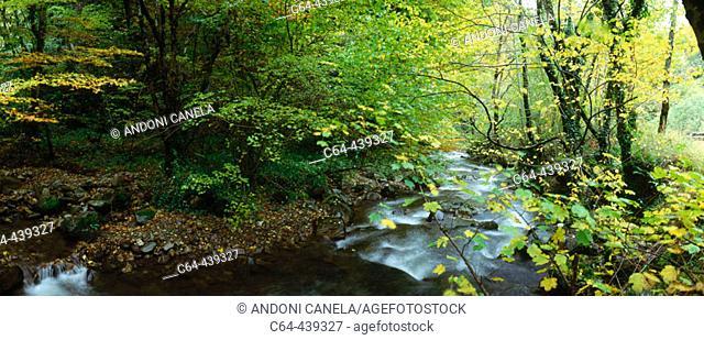 Narcea river and beechwood (Fagus sylvatica). Asturias. Spain