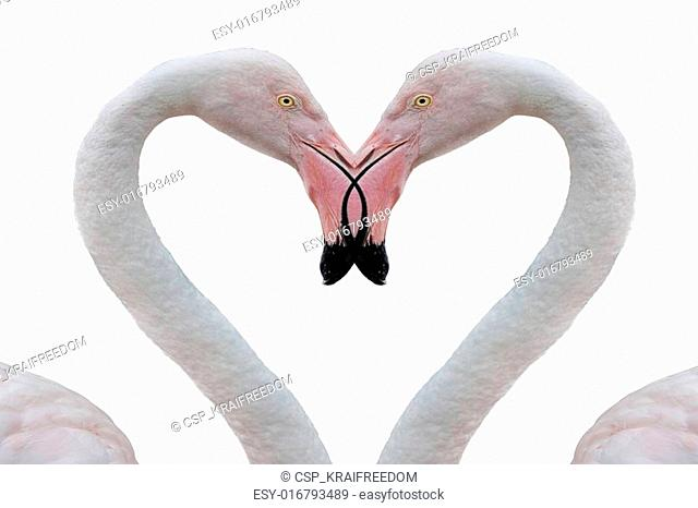 two pink flamingo making heart with necks
