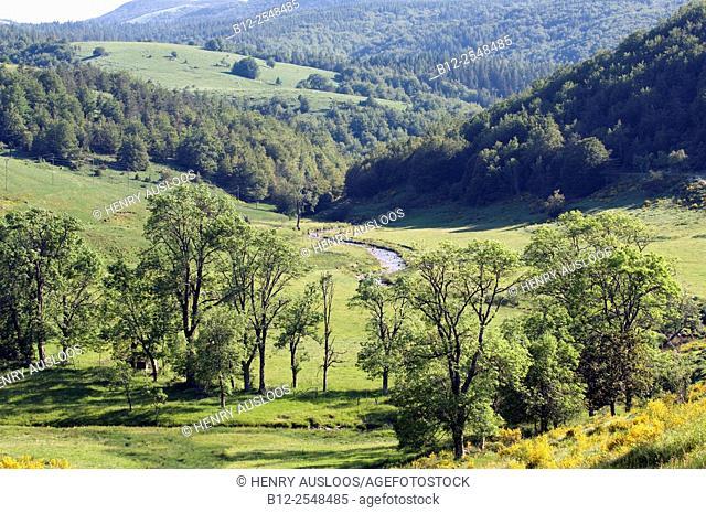 France, Gard department, Cévennes Mountains