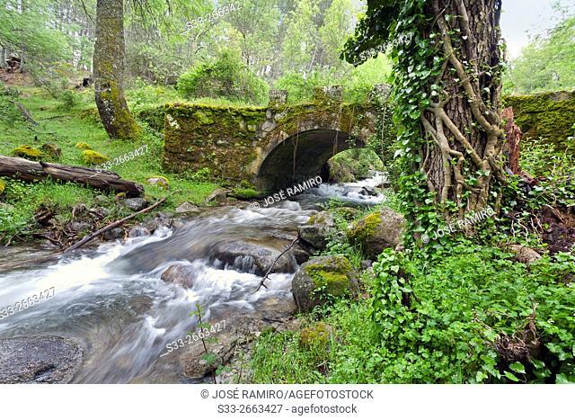Bridge over Solana Toro stream in the Sierra de Gredos. Avila. Castilla Leon. Spain. Europe