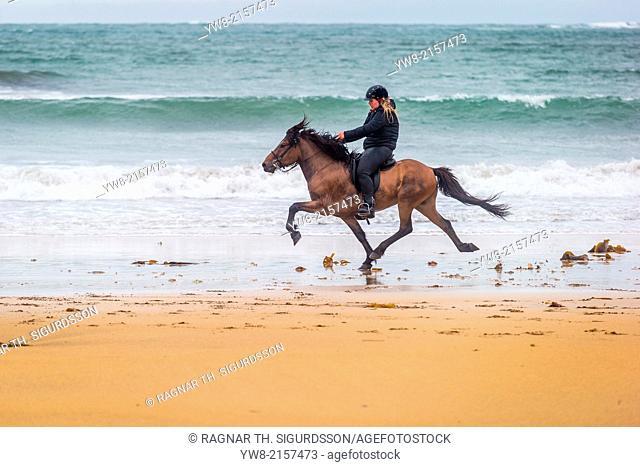 Horseback riding by the coast, Iceland