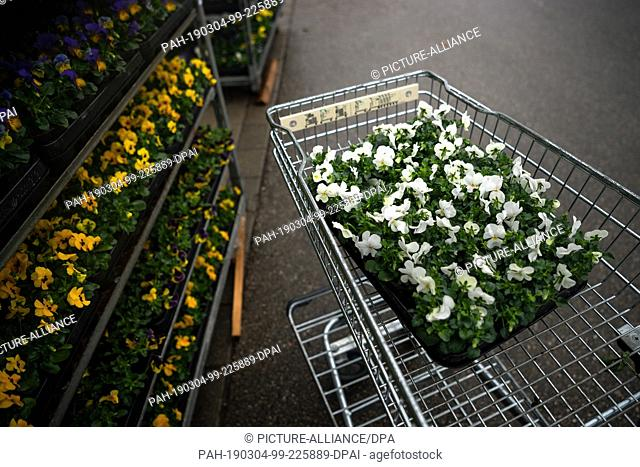 01 March 2019, Bavaria, München: In front of a garden centre there is a box of pansies in a shopping trolley. Around one fifth of their annual turnover is...